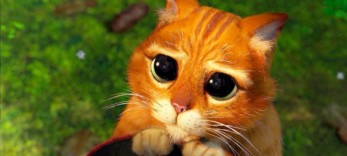 """Пронзительный взгляд кота из мультфильма """"Шрек"""""""